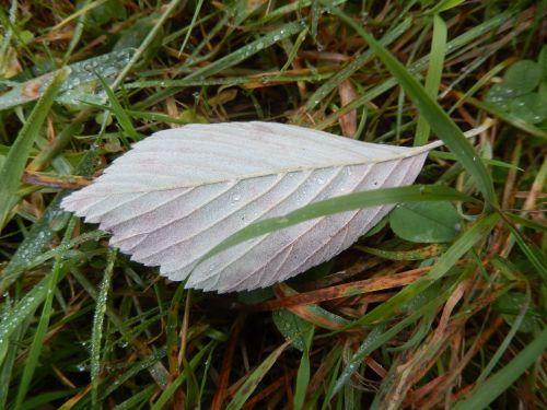 leaf pre nature