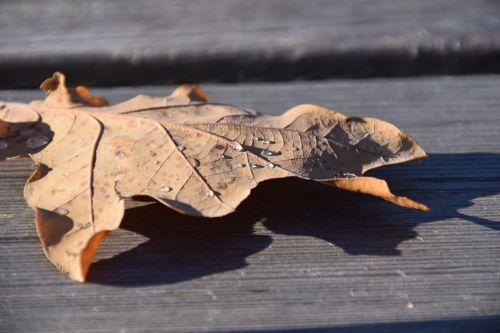 leaf leaves autumn