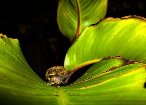 leaf snail plant