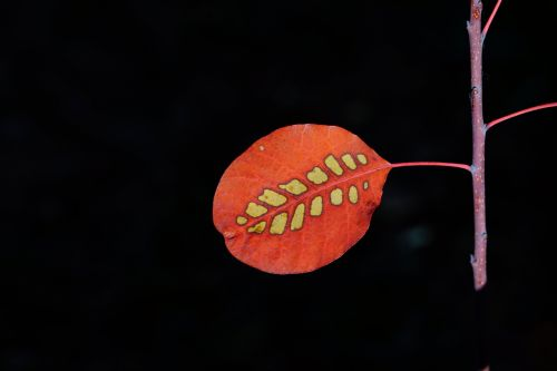 leaf wig brush autumn leaf