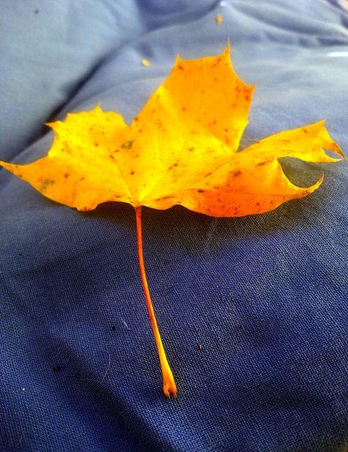 leaf autumn yellow