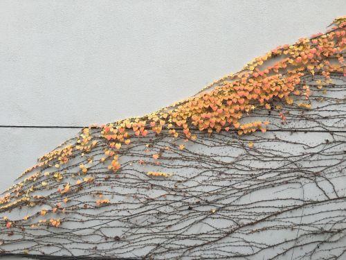 leaf autumn white walls