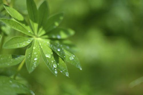 leaf drop moist