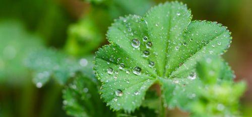 lapai,lašelinė,lietus,makro