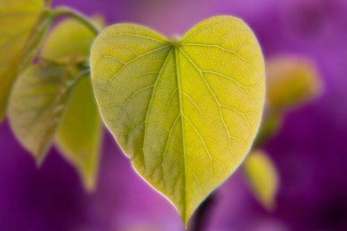leaf heart heart shape