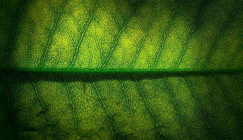 leaf nature green