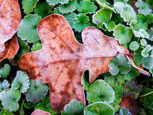 lapai,ruduo,sezonas,lapai,augalas,žalias,kritimas,šaltis,šaltas,gamta,matinis,kaulų čiulpai,Kentukis,uždarymas,pabaiga,mirtis,kritęs,iškirpti,miręs,skilimas,mirti,mirti,finality,dingo