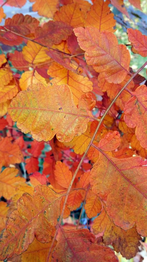 leaf fall autumn