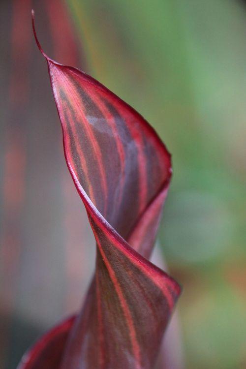 leaf plant rolled