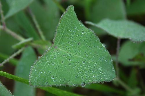 leaf plant green