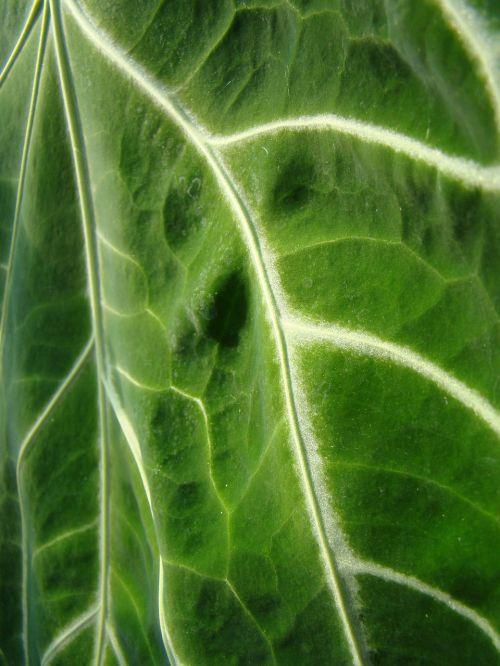 leaf green nature