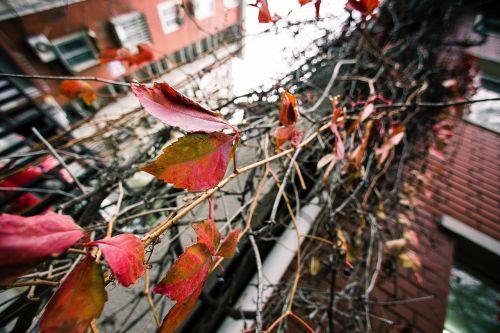 leaf plant autumn