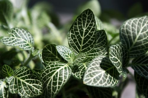 leaf plants nature