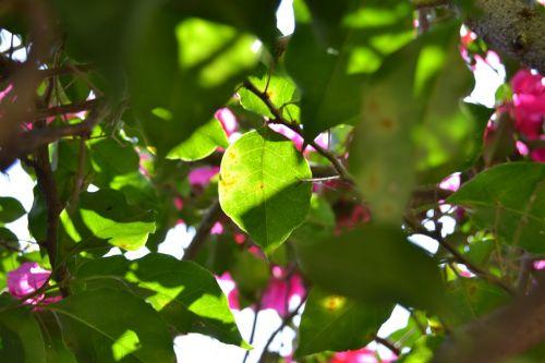 leaf light flowers