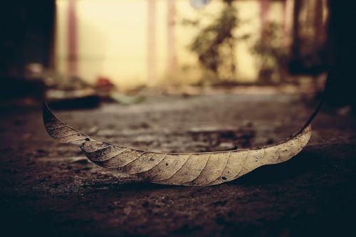leaf dead dry leaf