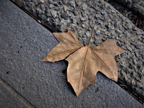 leaf autumn footpath