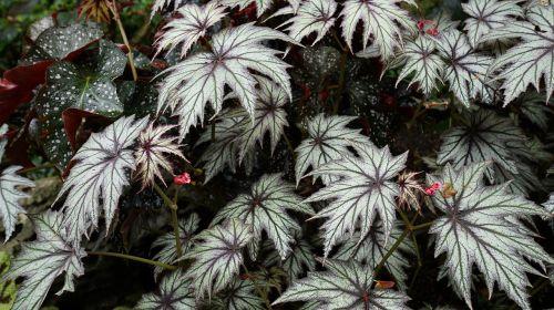leaf foliage plants cute