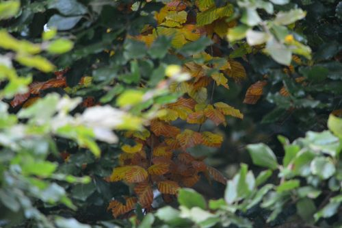 lapai,lapai,ruduo,miškas,žali lapai,žalias,augalas,rudens lapas,žalia augalas,vasara,natūralus,pasikeičia sezonas,lapija,negyvi lapai