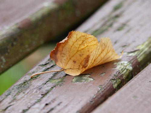 leaf bank autumn colours