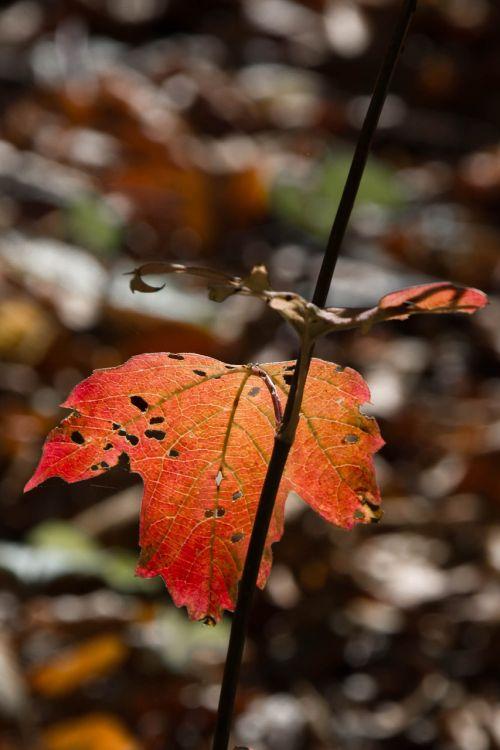 leaf fall autumn leaves