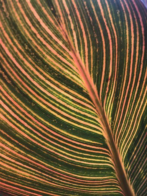 leaf patten lines