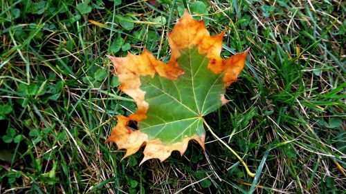 leaf autumn two-tone