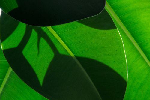 leaf wood green
