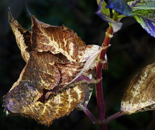 leaf autumn fall color