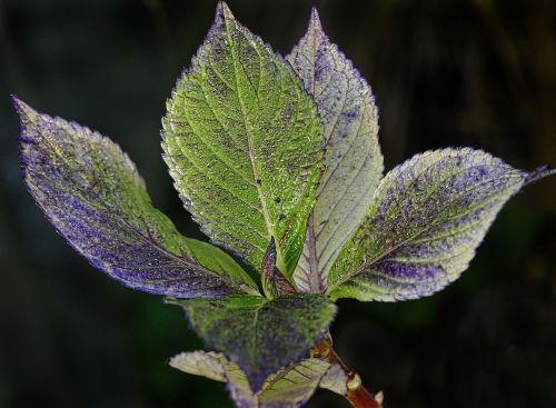 leaf dewdrop autumn