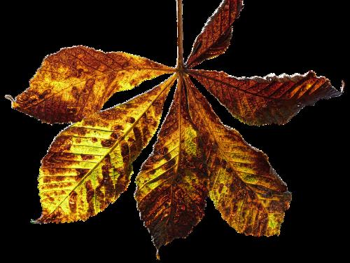 leaf autumn leaf fall color