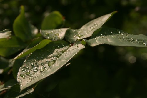 leaf nature rain