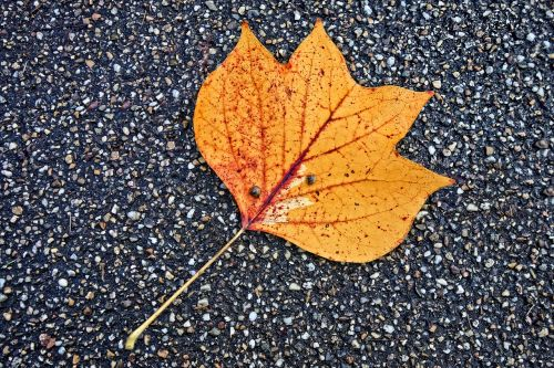 leaf fallen leaf road