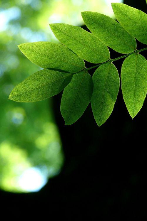 lapai,gamta,žalias,bagažinė