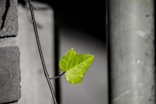 lapai,žalias,gamta,miestas žalia,žalias lapas,augalas,ekologija,augimas,gyvenimas