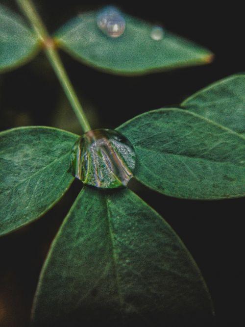 leaf nature droplet