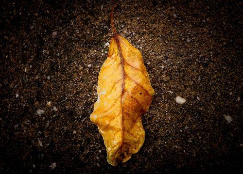 lapai,gamta,nukritę lapai,lapija,sausas lapas,kraštovaizdis,sodas,geltona,sausas lapai,lapai džiūsta