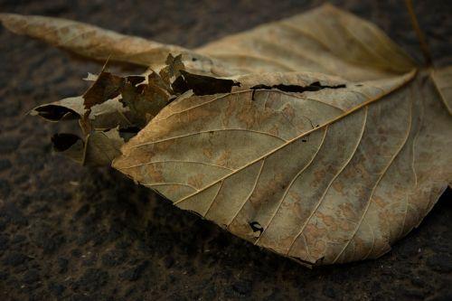 leaf brushwood withered