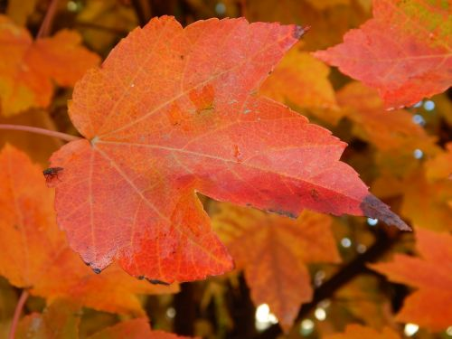 leaf autumn autumn leaves