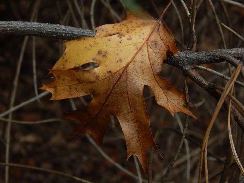 leaf fall brown