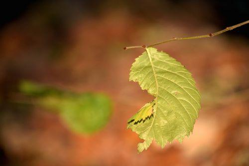 lapai,ruduo,gamta,makro,parkas,grožis,medis,bagažinė,augalas,Iš arti