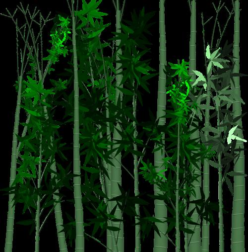leaf bamboo plant