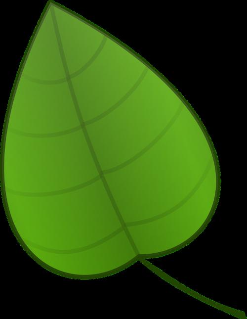 leaf green plants