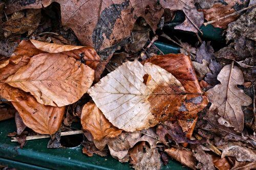 leaf dead leaf brown leaf
