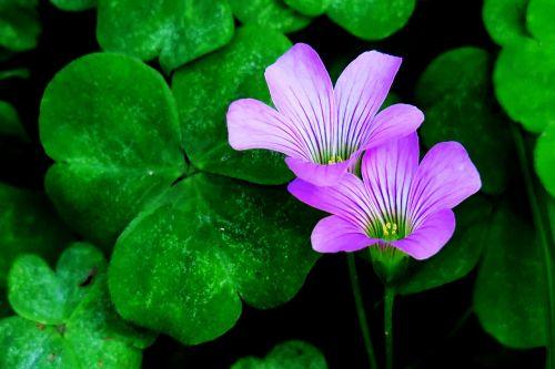 leaf plant flower