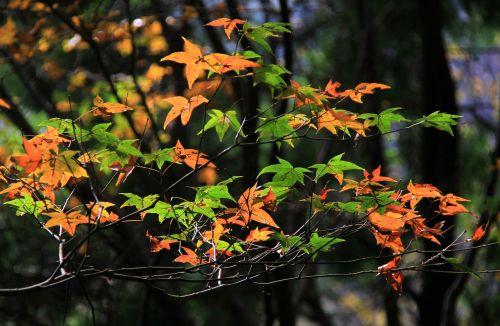 leaf autumn nature