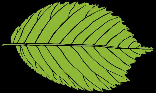leaf green oval