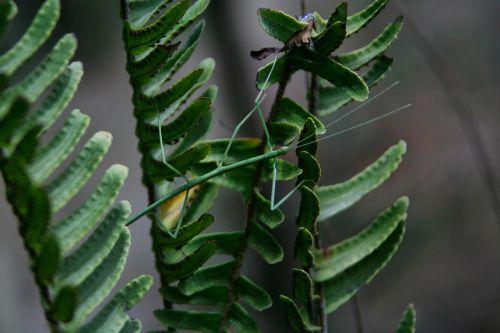 leaf plant nature