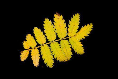 leaf nature plant