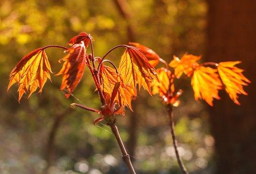 leaf  spring  nature