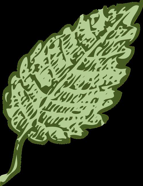 leaf green single